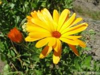 kwiat_345