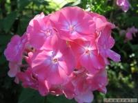 kwiat_346