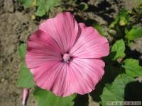 kwiat_351