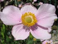 kwiat_352