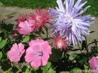 kwiat_353