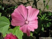 kwiat_355