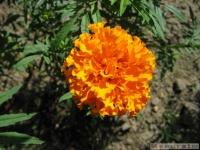 kwiat_357