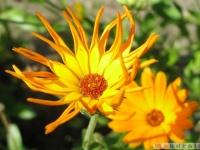 kwiat_359