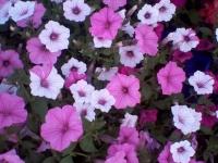 kwiat_362