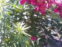 kwiat_364