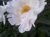 kwiat_365