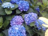 kwiat_367
