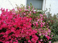 kwiat_376