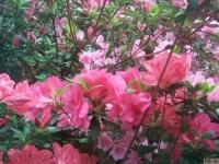 kwiat_377