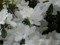 kwiat_379