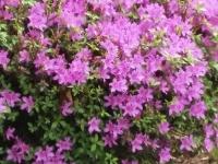 kwiat_382
