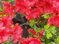 kwiat_383