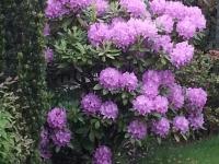 kwiat_385