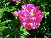 kwiat_386