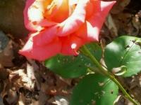 kwiat_387