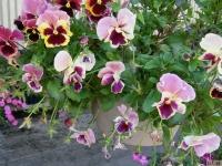 kwiat_393
