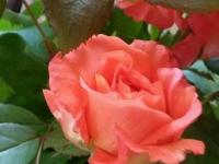 kwiat_398