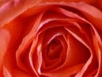 kwiat_399