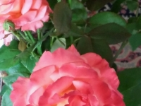 kwiat_400