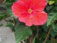 kwiat_401