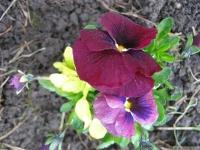 kwiat_424