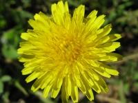 kwiat_438