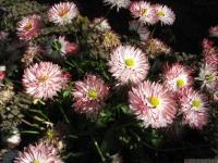 kwiat_440
