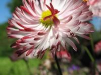 kwiat_444