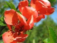 kwiat_452