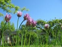 kwiat_458