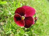 kwiat_463