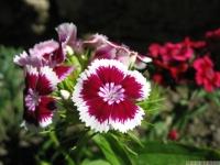 kwiat_465