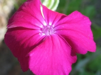 kwiat_474