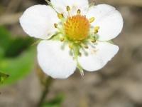 kwiat_476
