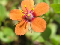 kwiat_477