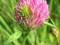 kwiat_480