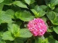 kwiat_482