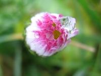 kwiat_488