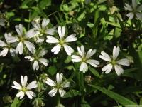 kwiat_496
