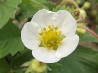 kwiat_500