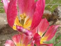 kwiat_503