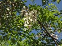 kwiat_509