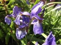 kwiat_512