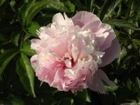 kwiat_519