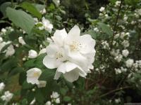 kwiat_524
