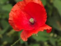 kwiat_531