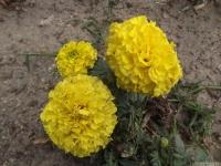 kwiat_540