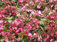 kwiat_542