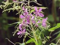kwiat_546